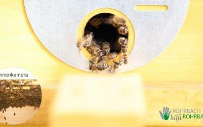 Digitaler Bienenstock21 – Die fleißigen Bienchen sind wieder eingezogen 🐝 🐝