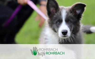 2 Jahre Hundeschule Carmen Alt